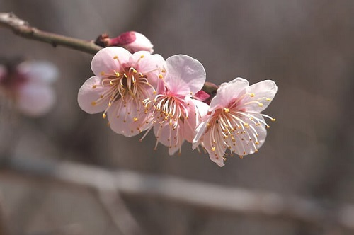 flowers-3264068_640.jpg